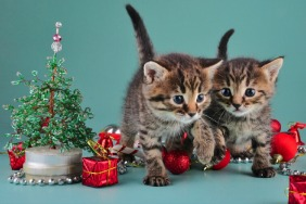 Two kittens surrounded by Christmas decorations