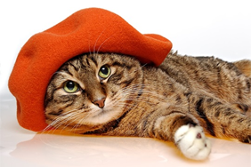 Cat wearing a hat